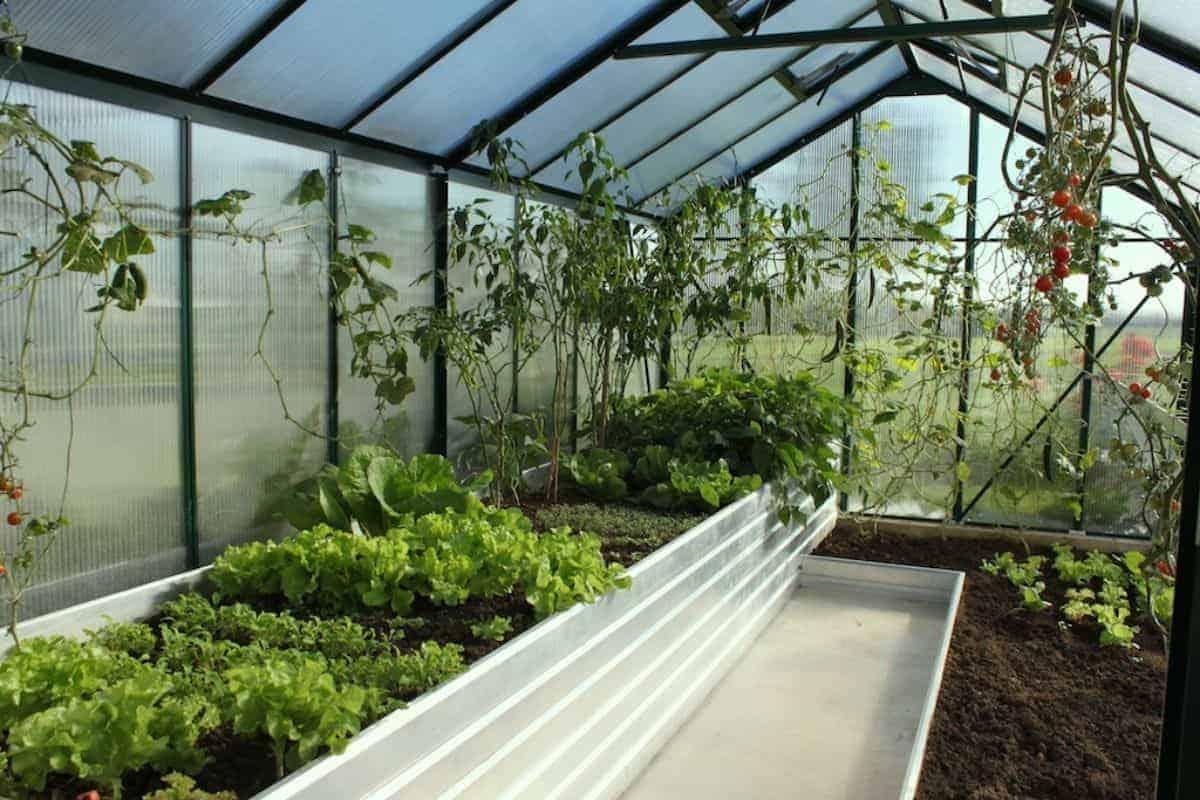 Hochbeet-Gewächshaus mit Salat