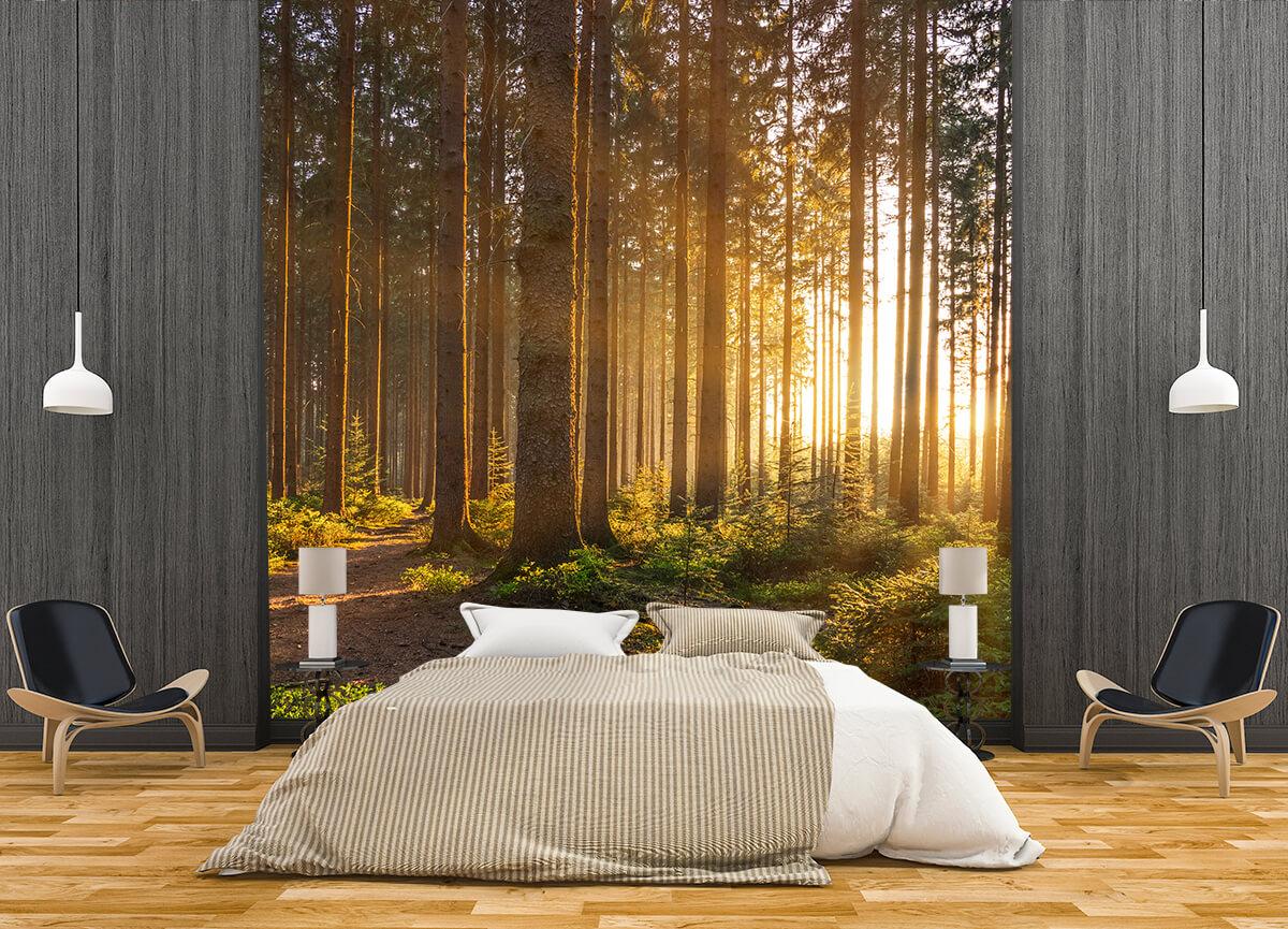 Fototapety na ścianę sypialni - Las