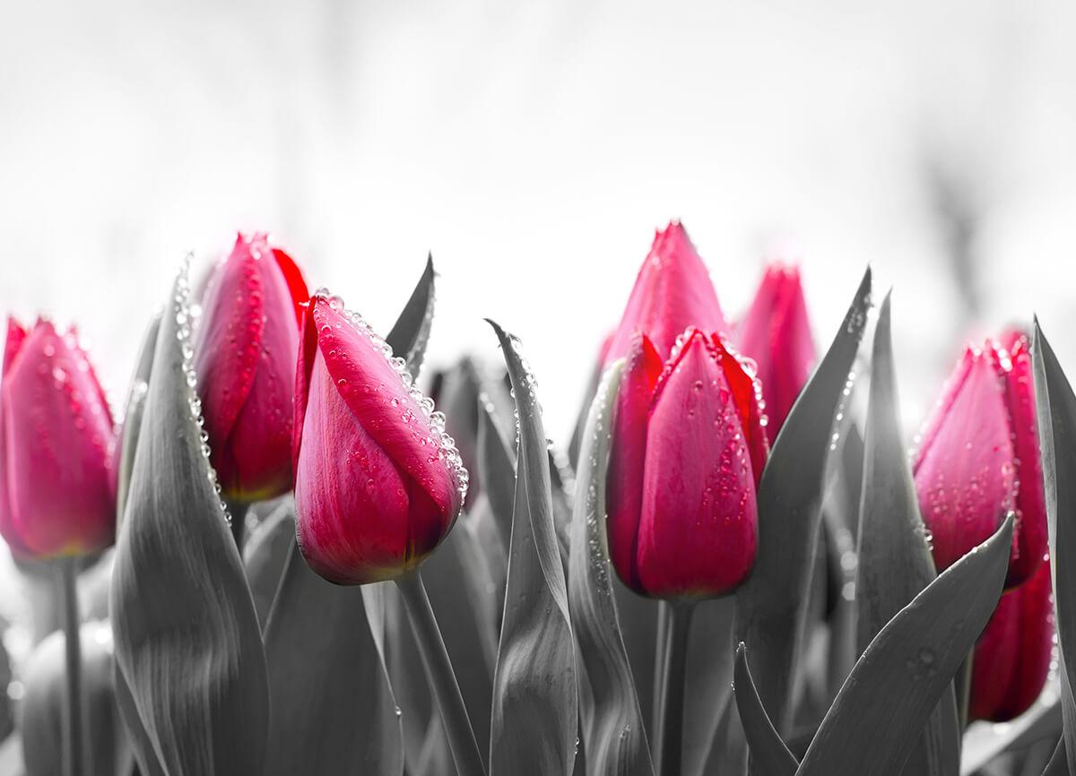Kwiaty obrazy na płótnie do domu