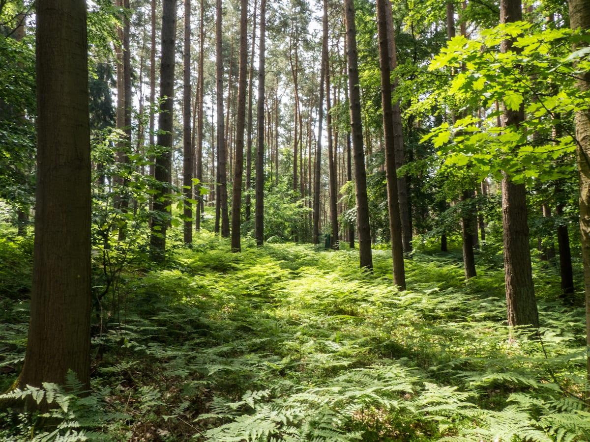 Wald am Langen Berg - Usedom mit Kind