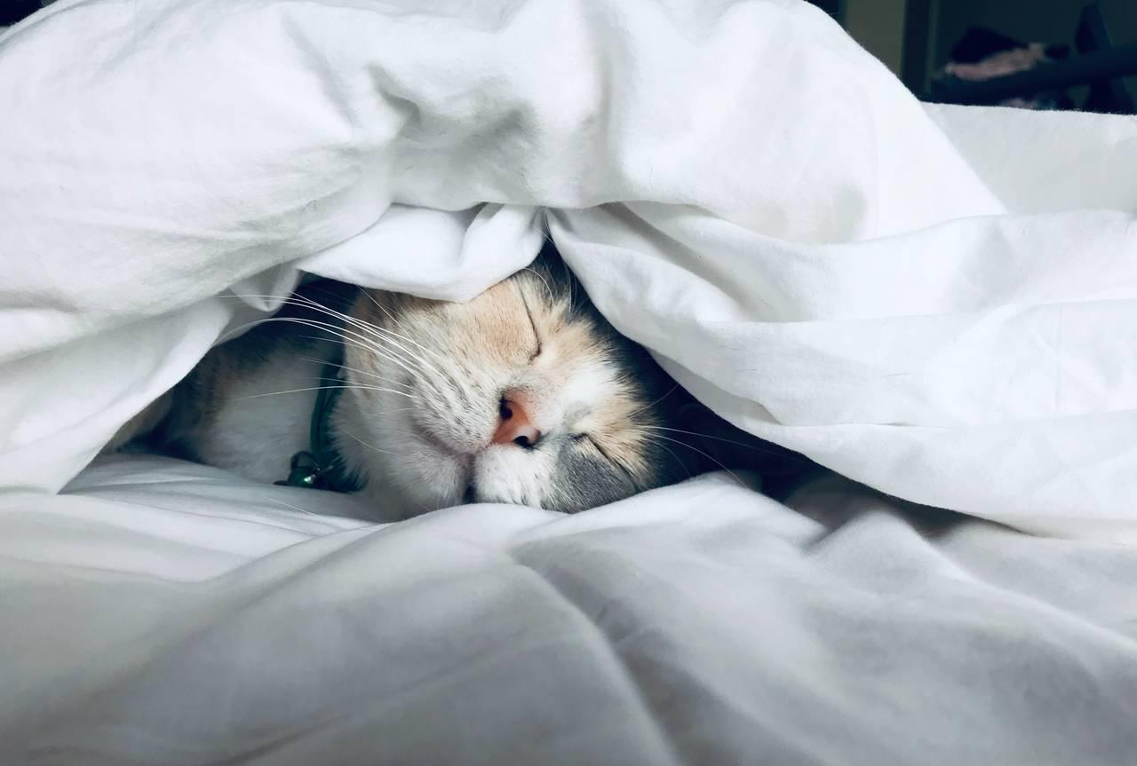 Kot śpi włóżku