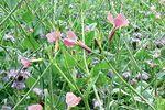 VITERRA – a köztesnövény vetőmagkeverékek csúcsa (+80 €/ha támogatás)