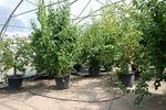 A növénynemesítők vándorgyűlése