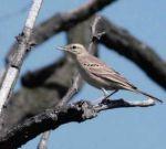 Mezőgazdaság és természetvédelem IV. – A pacsirtától az ugartyúkig – madárvédelem a szántókon