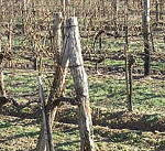 A szőlővenyige energetikai  hasznosításának lehetőségei