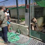Unidas Podemos reclama que no descienda el presupuesto municipal para la recogida de animales abandonados en Albacete