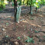 Los cultivos albaceteños, entre los más dañados por las últimas tormentas