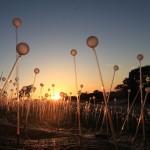 Field of Light at Sensorio, Paso Robles
