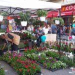 """Festivalul-florilor-""""Timfloralis""""-a-ajuns-la-ultima-zi10"""