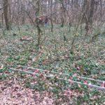 Un-bărbat-a-fost-găsit-spânzurat-de-un-copac-la-Pădurea-Verde-4