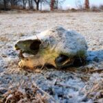 Heavy Frost Romania Winter Skull