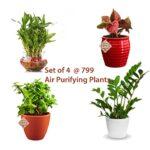 Air Purifying Plants (Natural)