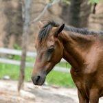 Most Common Symptoms of Lyme Disease in Horses