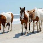 Can Horses Get Diabetes?