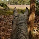 Renderklippen paard