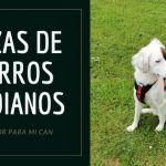 razas de perro medianos