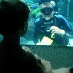 In der Unterwasser-Zauberwelt: Florida Aquarium Tampa