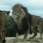 Safaripark von Sigean – ein Abenteuer für die ganze Familie