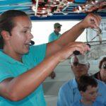 Eco-Boat-Tour in Sarasota: Einblicke ins Unterwasserparadies von Florida