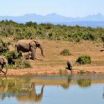 Einmalige Erlebnisse in Südafrika - Tanja verrät ihre Geheimtipps