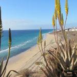 Die schönsten Strände und Buchten auf Fuerteventura