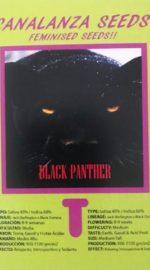 Black-Panther-Canalanza Seeds