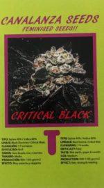 Critical Black Seed-Canalanza Seeds