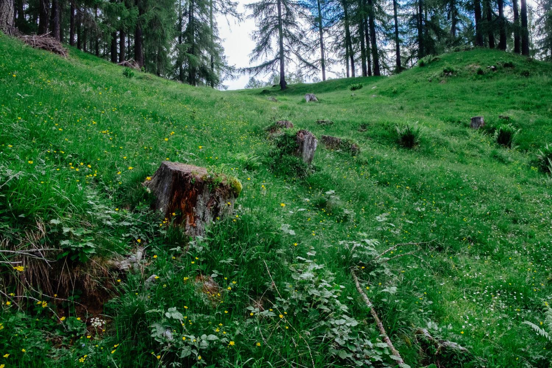 Grüne Waldwiese mit Baumstümpfen