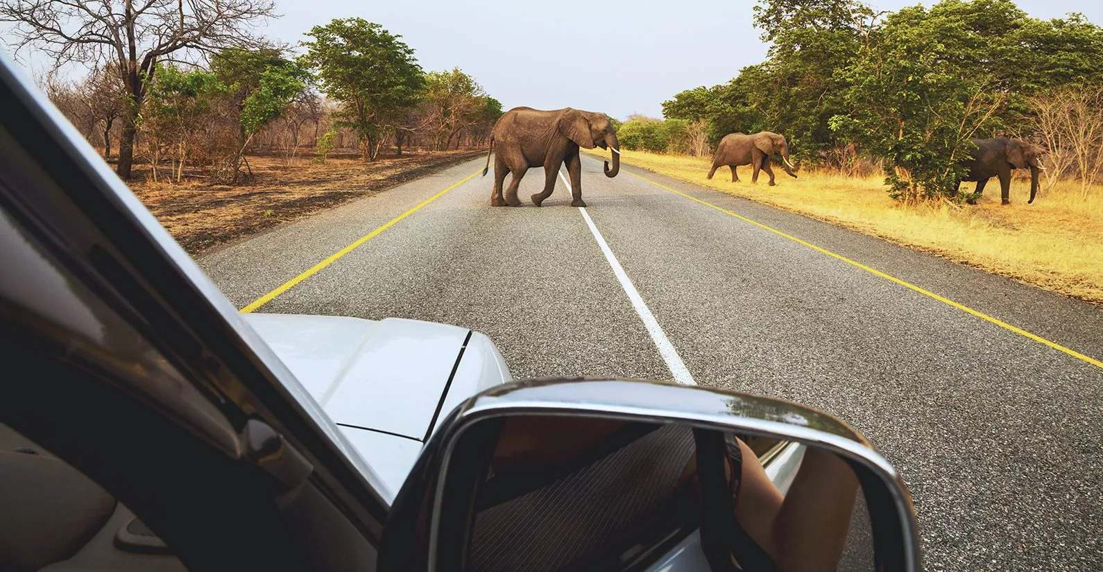 driving through kruger park