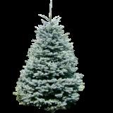 Weihnachtsbaum online günstig bestellen mit Gutschein 35% inklusive Lieferung bei Weihnachtsmann Guru