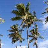 Dominikana – porady praktyczne, jak tanio spędzić wakacje?