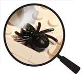 Hidden Lego Spider