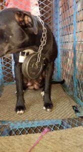 Nelspruit SPCA