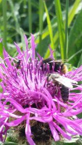 Dünger im Frühjahr für Insekten wichtig