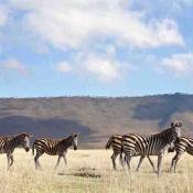 Ngorongoro Crater-9