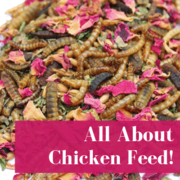 Chicken Feed 101 For New Owners