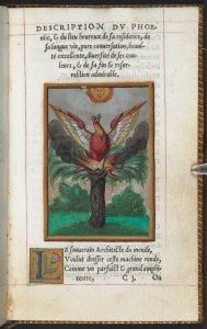 guy_de_la_garde__l_histoire_et_description_du_phoenix__1550__c__british_library