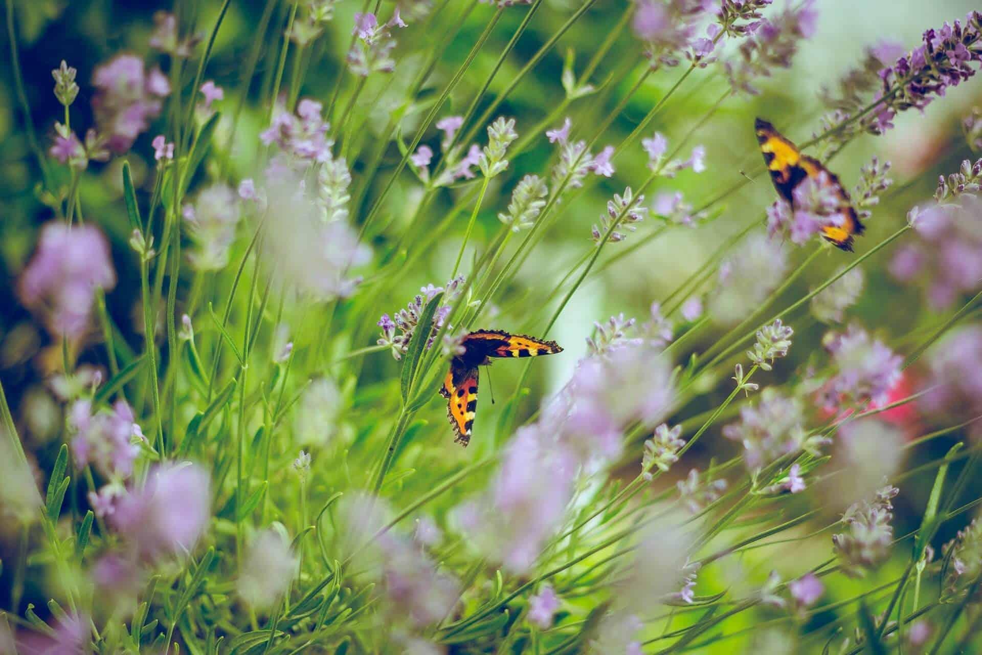 How To Create a Wildlife-Friendly Garden In 7 Ways
