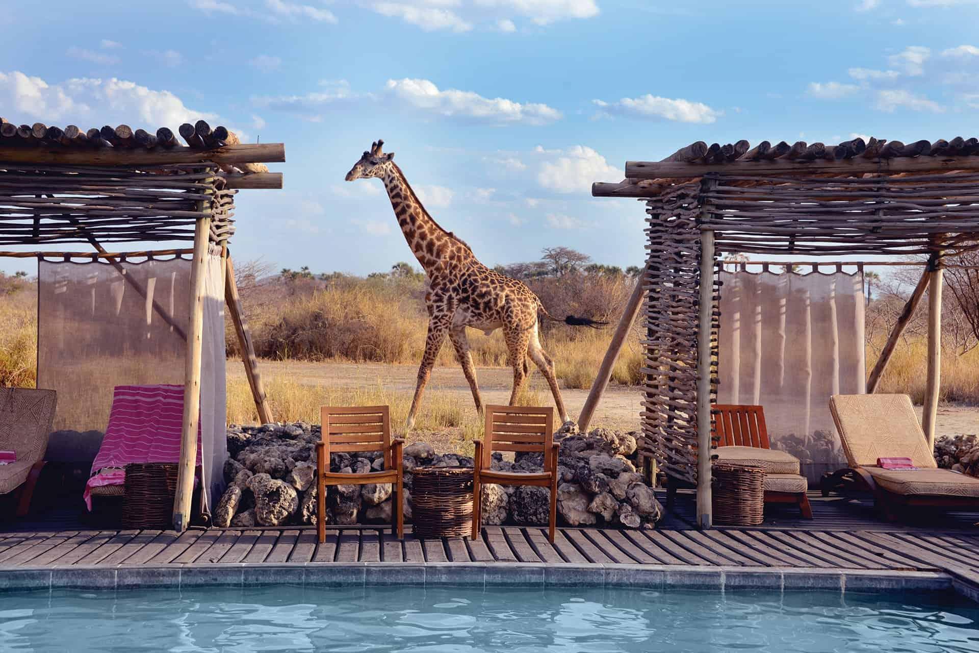 serengeti-safari