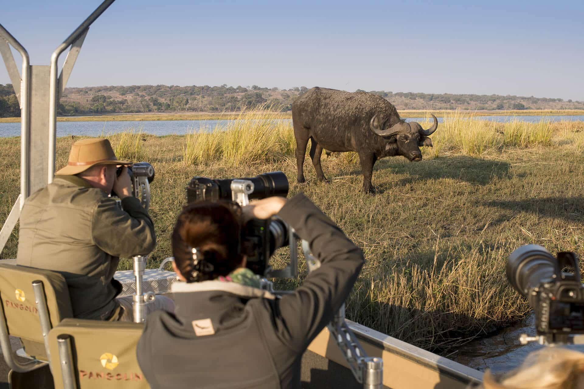 Photographers sighting a buffalo