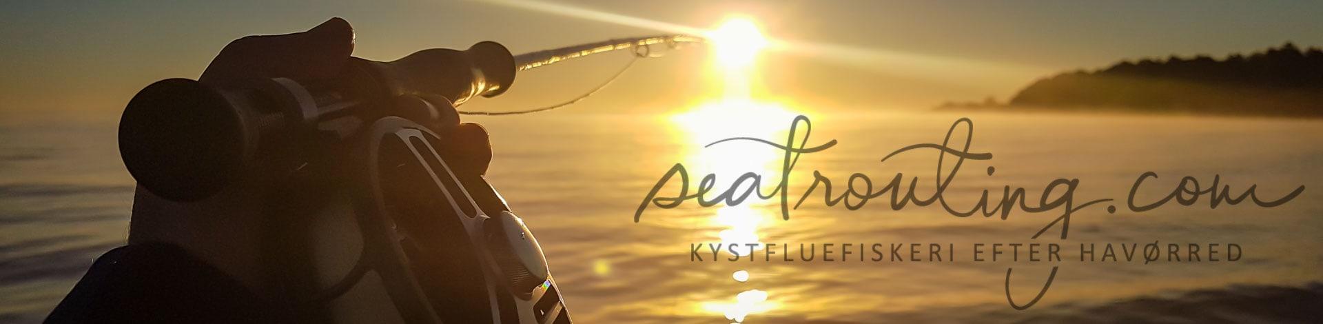 seatrouting kystfluefiskeri havørred kysten danmark sjælland møn kystfiskeri