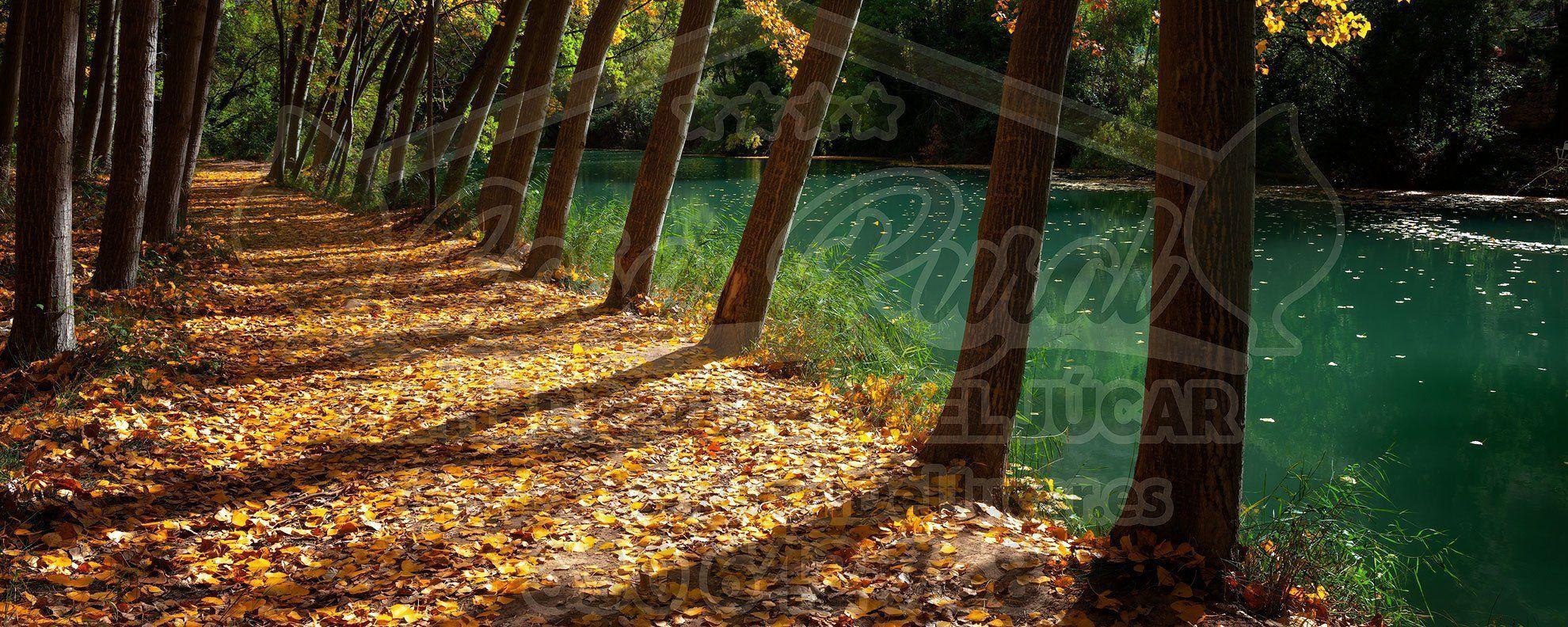 Chopera en la orilla del río Júcar en Jorquera