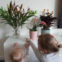 Corona Lockdown Ouderschaps tips! Het wordt best pittig je kinderen 3 weken thuis. Wij hebben wat tips voor jou om je kinderen met leerzame en maatschappelijk verantwoorde activiteiten bezig te houden.
