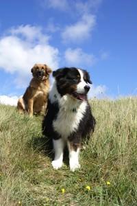Normandie Urlaub mit Hunden