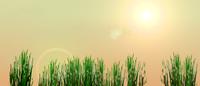 Bild - Twitter Hintergrund - sun of evening, Dateityp: png, 1600 x 685, Größe: 567.68 kB
