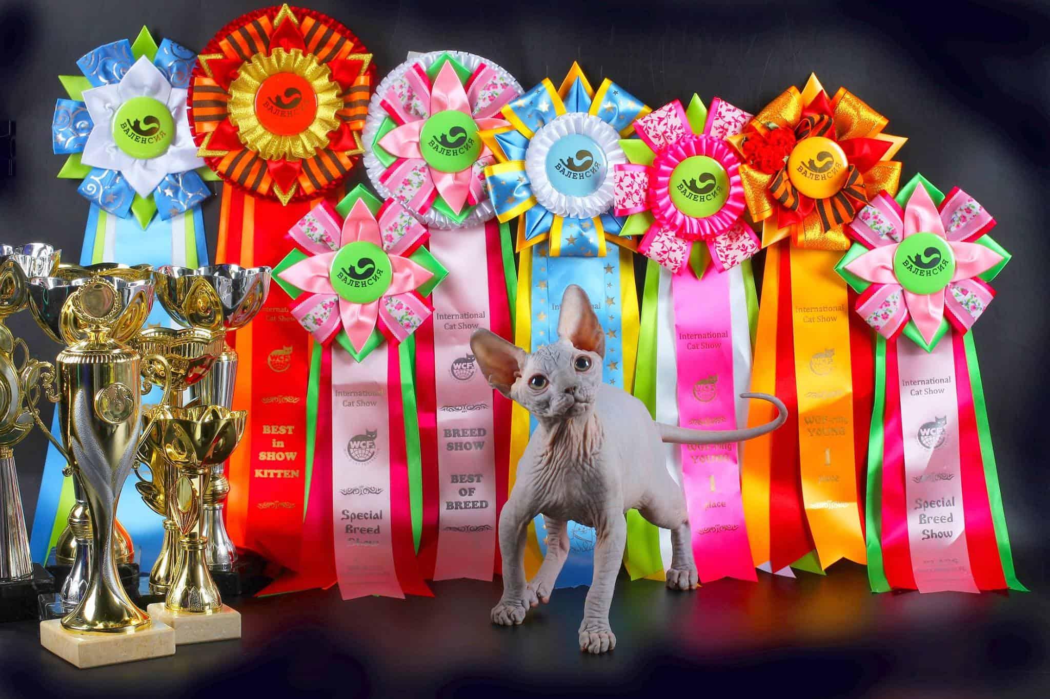 Кошарики Шоу Выставка-продажа котят «Кошарики Шоу» 5 3