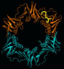 Anneau de processivité d'E. coli