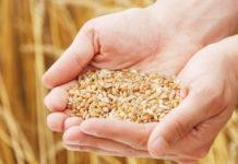 Wheat World Food Day mg magazine Bloom Farms PAX Eaze