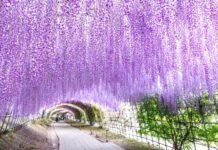 tunel z kwiatów
