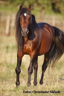 Arthrose bei Pferden - wie ist sie zu managen?